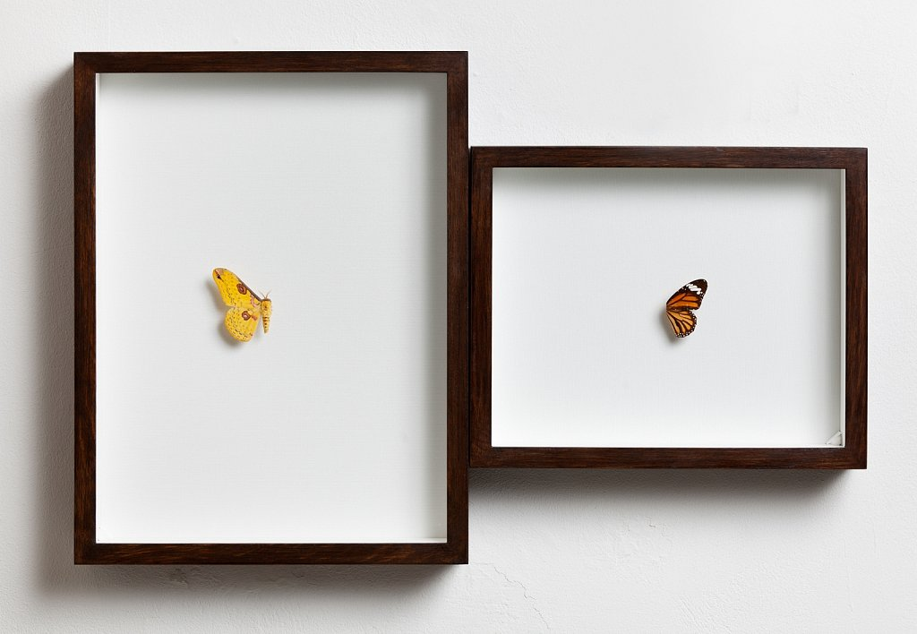 A Couple of Butterflies #1
