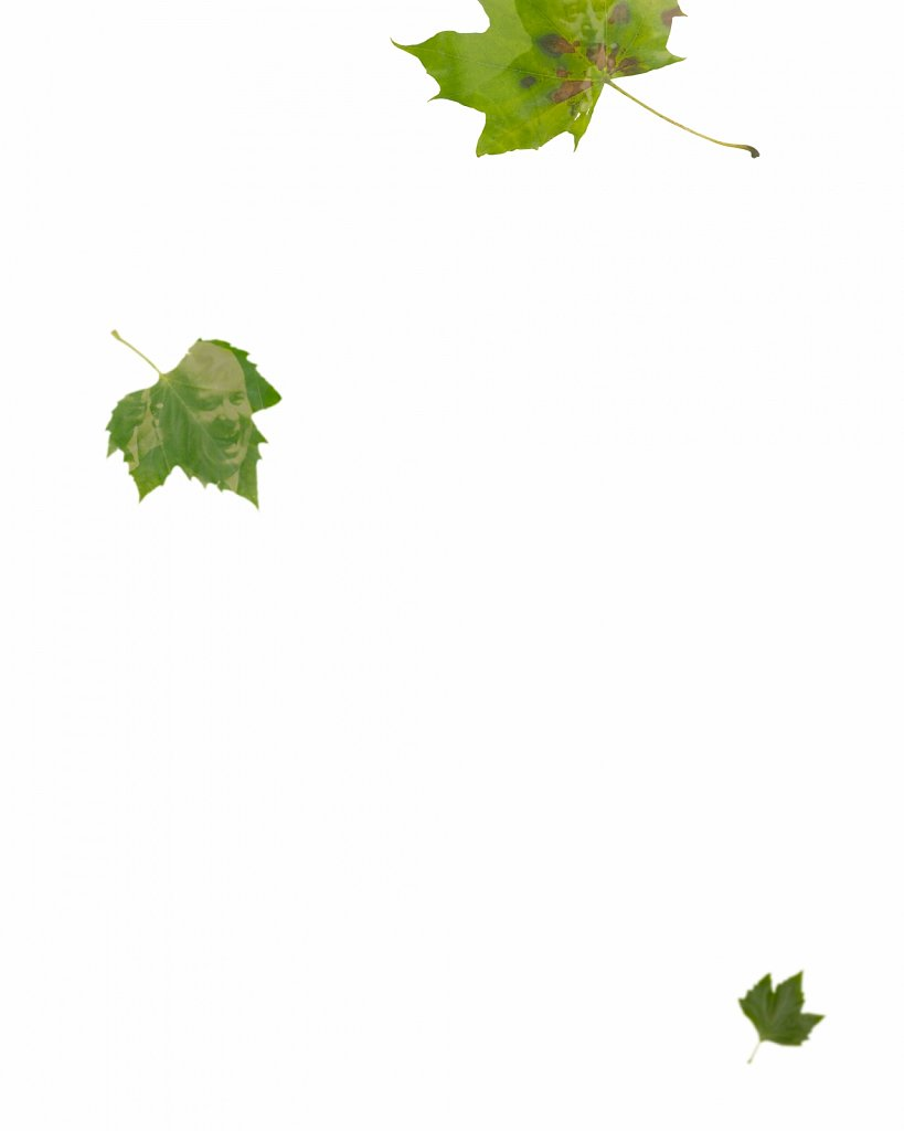 Human Leaves B