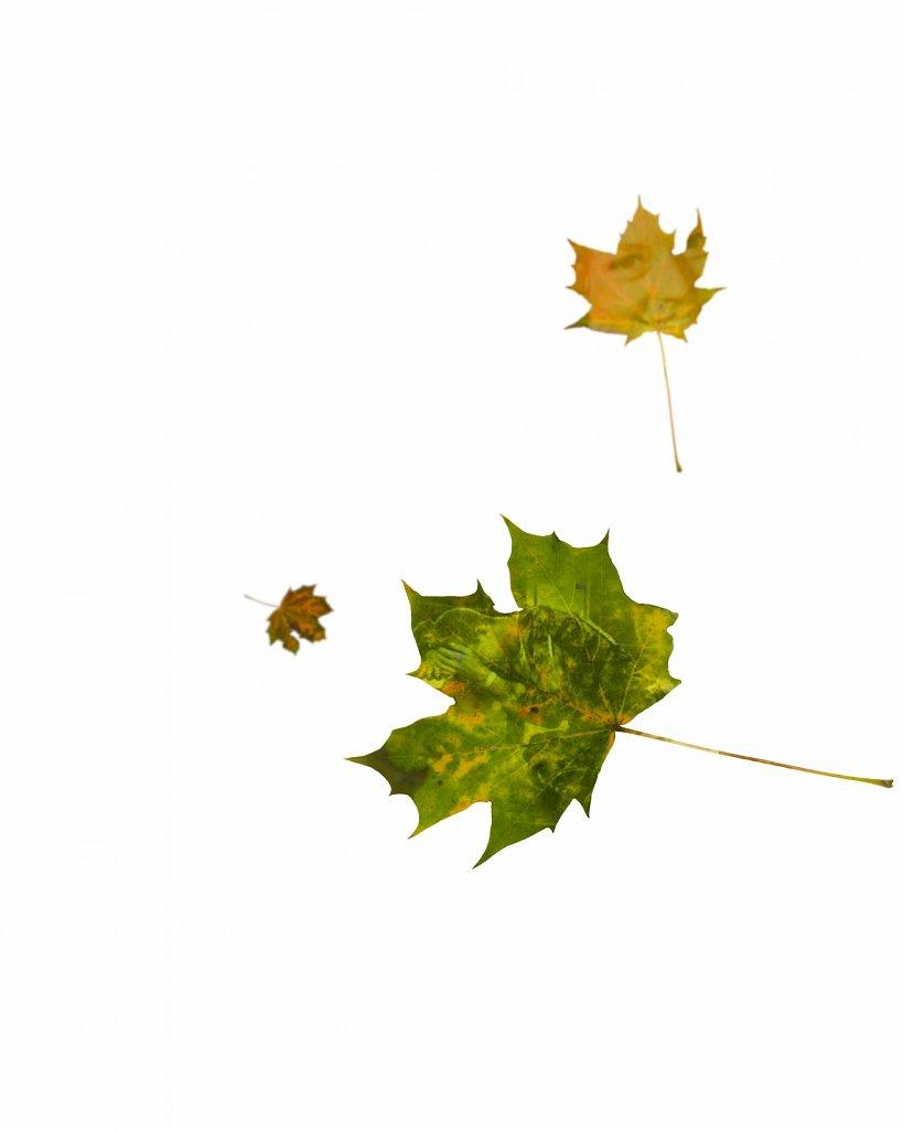 Human Leaves C