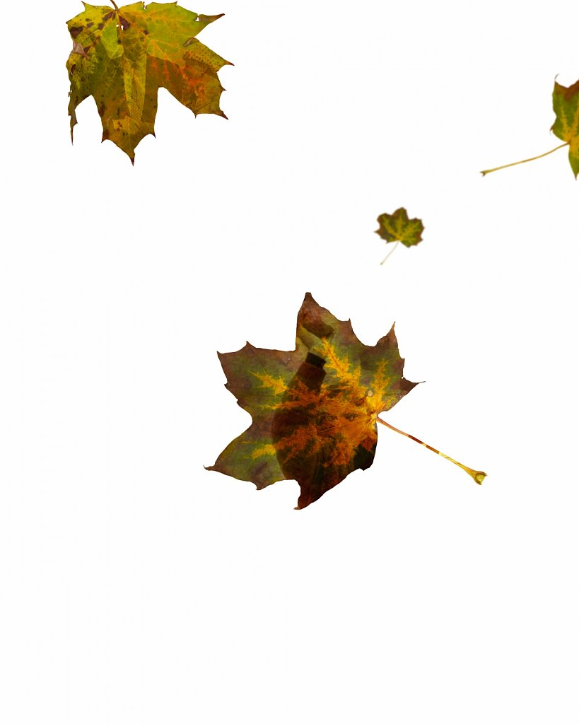 Human Leaves