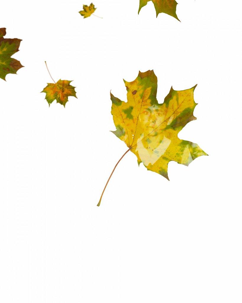 Human Leaves H