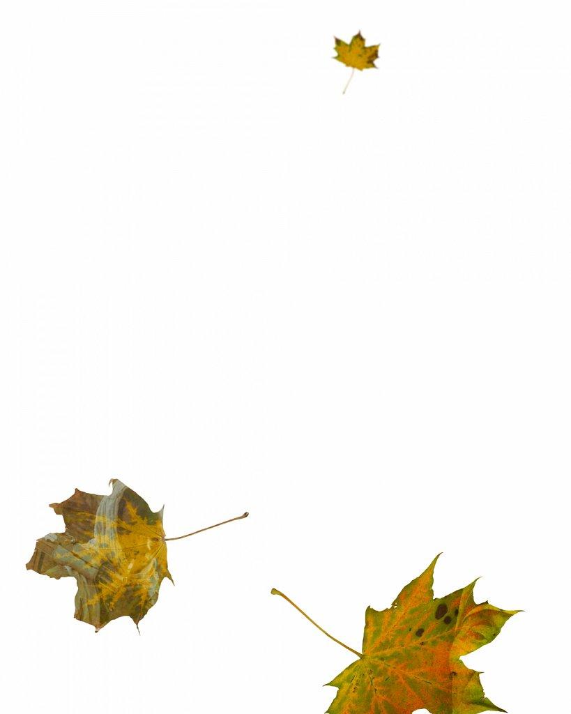 Human Leaves G