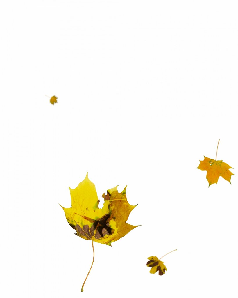 Human Leaves J