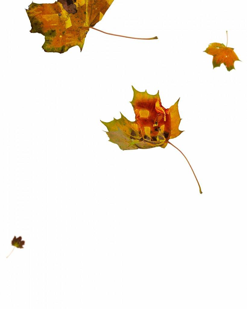 Human Leaves L