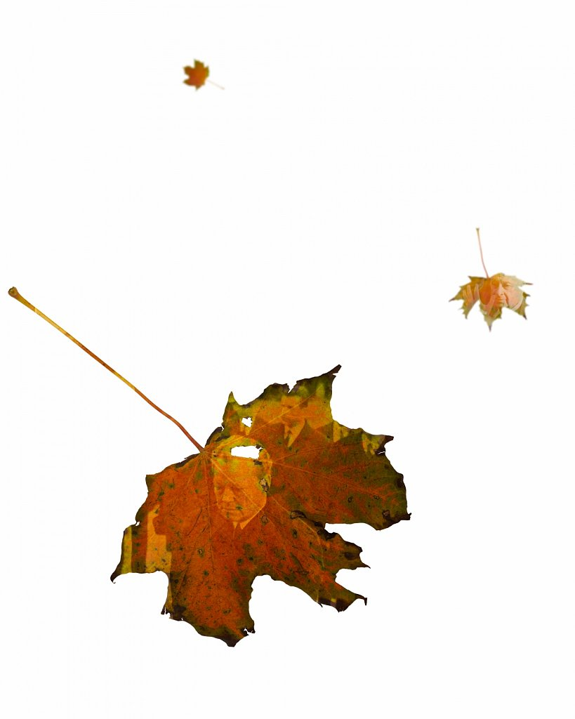 Human Leaves M