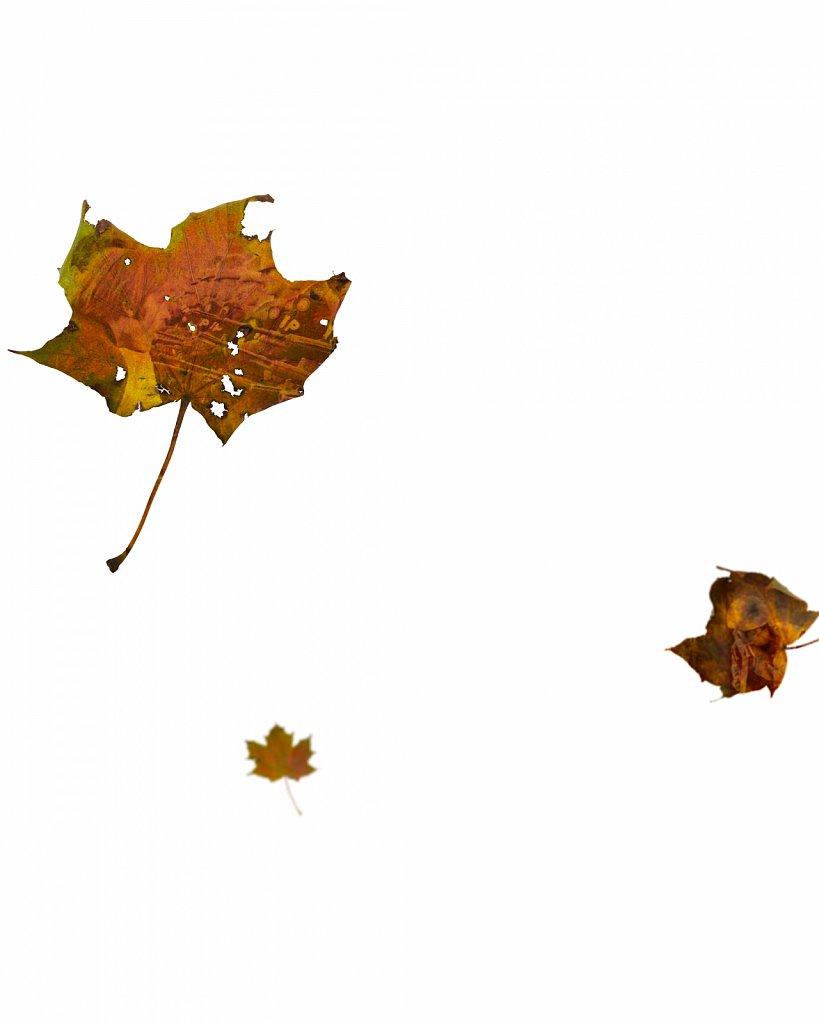 Human Leaves N