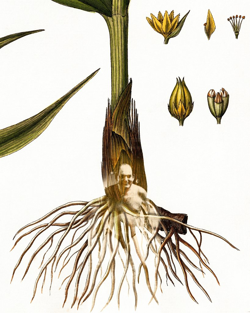 Flora Danica III,  Tab. 3