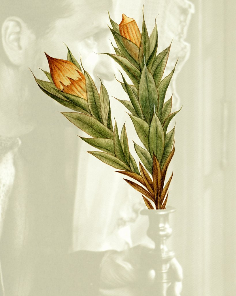 Flora Danica III,  Tab. 26