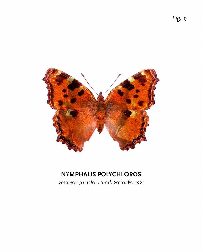 World of Butterflies, Fig. 9