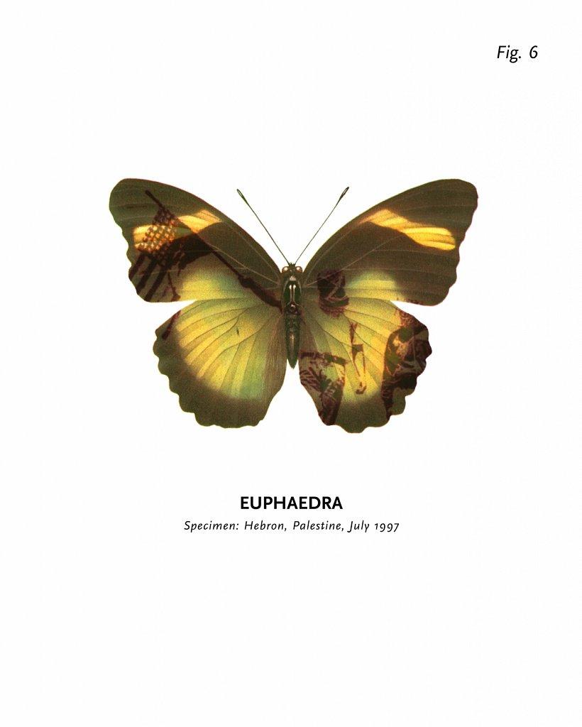 World of Butterflies, Fig. 6