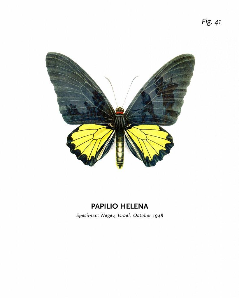 World of Butterflies, Fig. 41