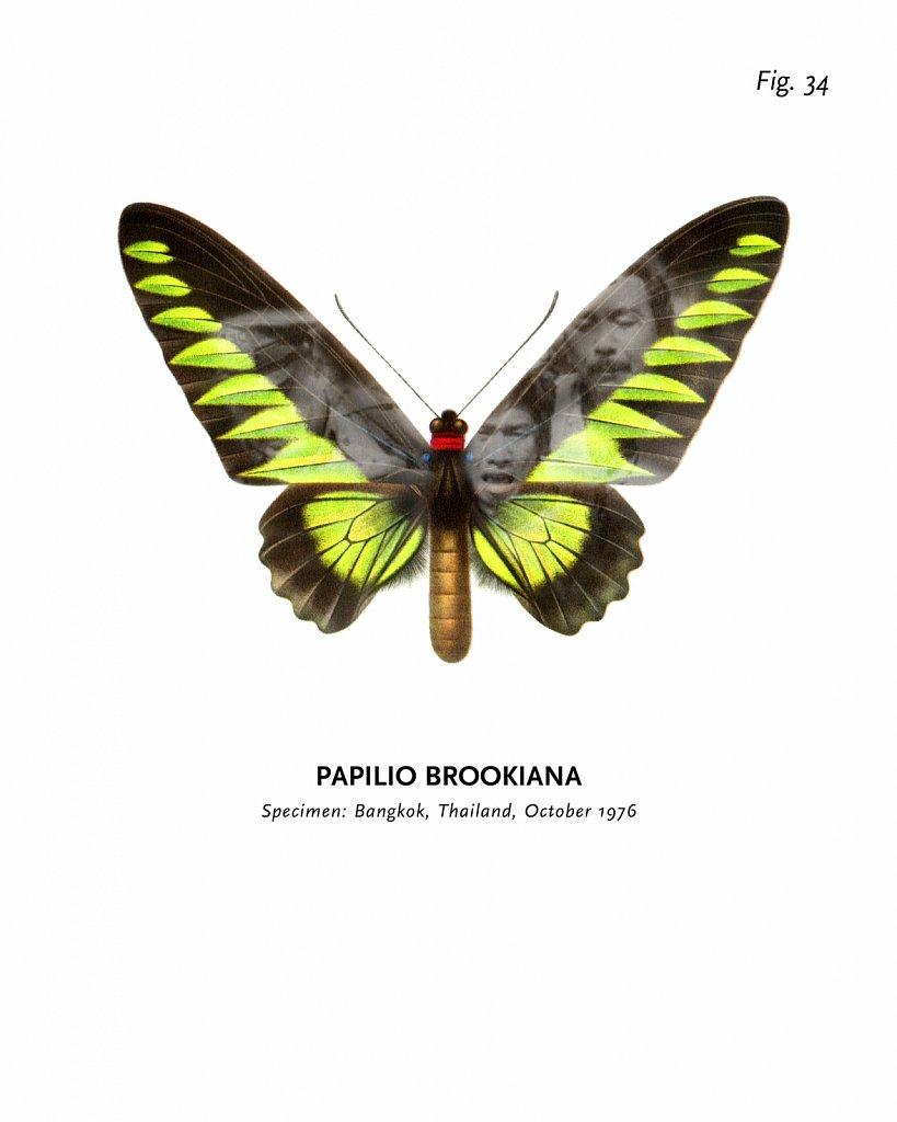 World of Butterflies, Fig. 34