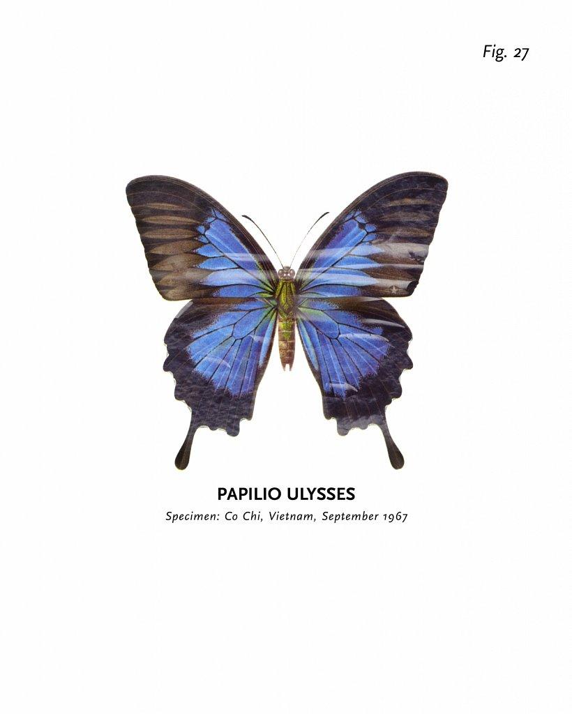 World of Butterflies, Fig. 27