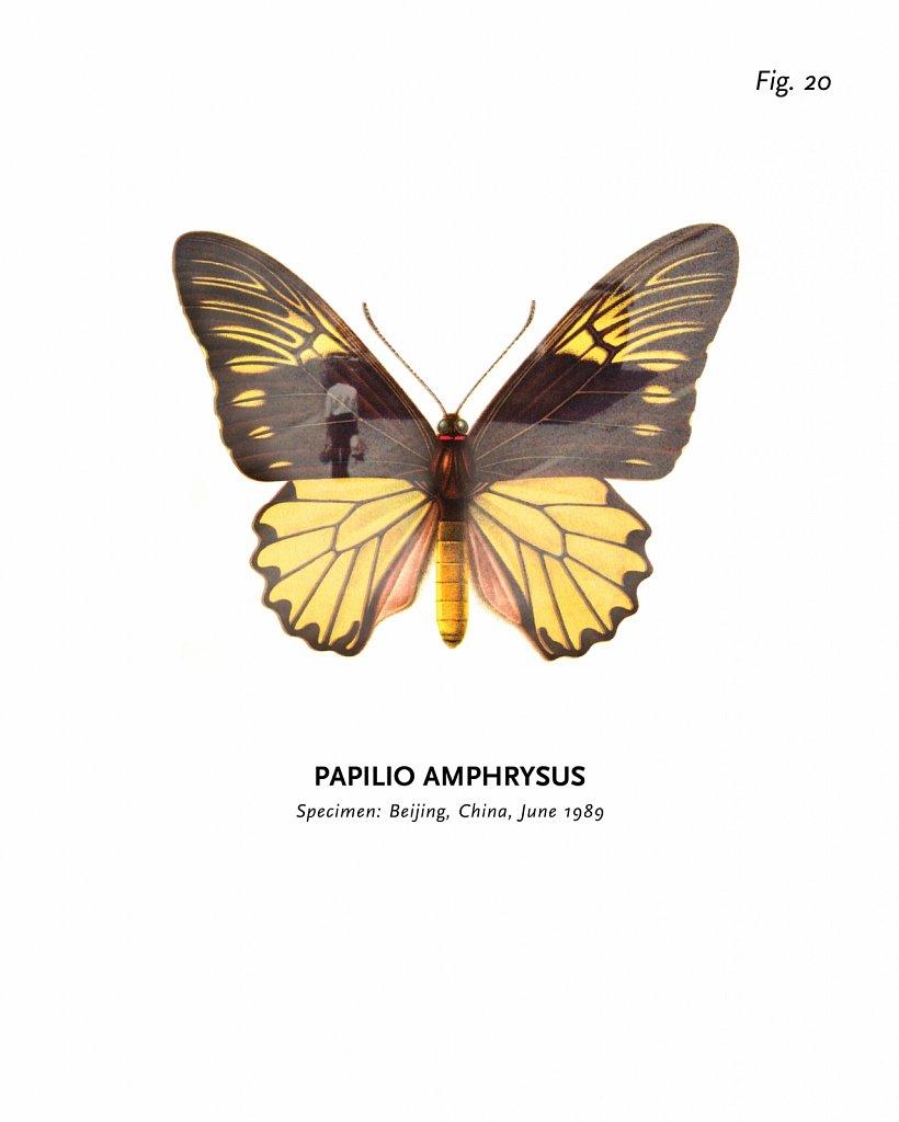 World of Butterflies, Fig. 20