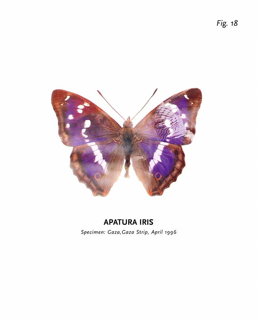 World of Butterflies, Fig. 18
