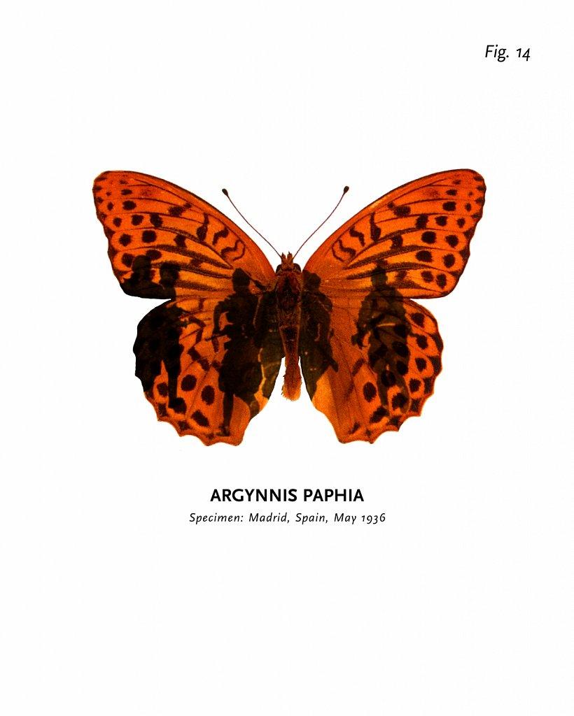 World of Butterflies, Fig. 14