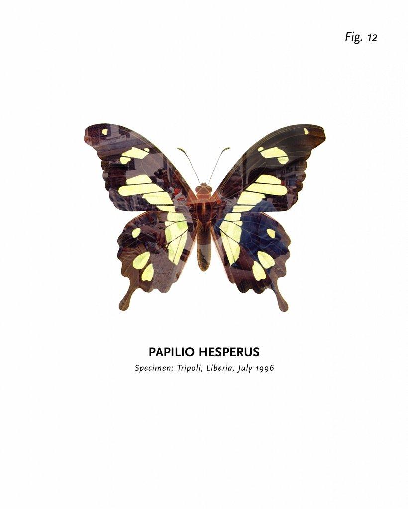 World of Butterflies, Fig. 12