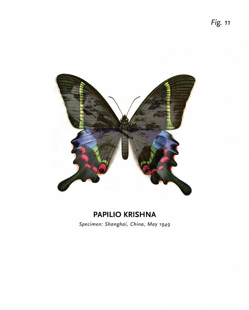 World of Butterflies, Fig. 11
