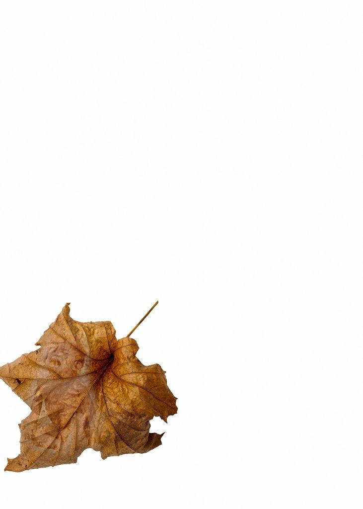 Human Leaves no. 16