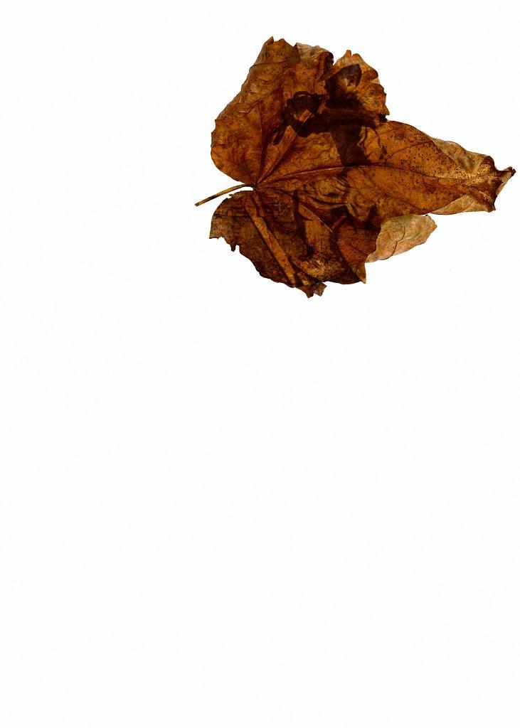 Human Leaves no. 12