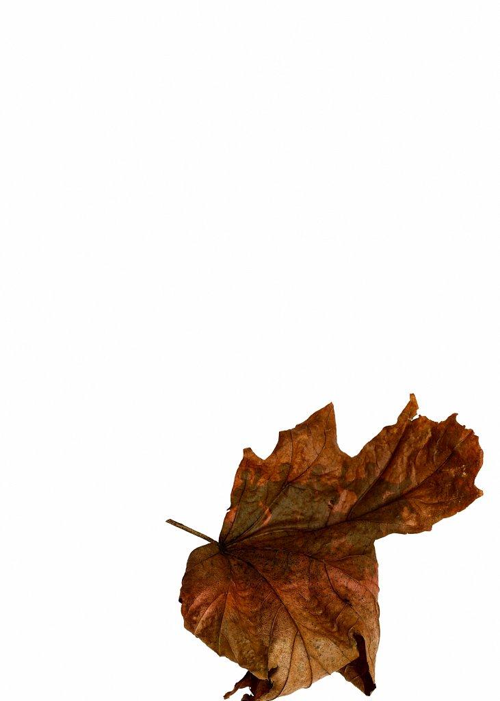 Human Leaves no. 7