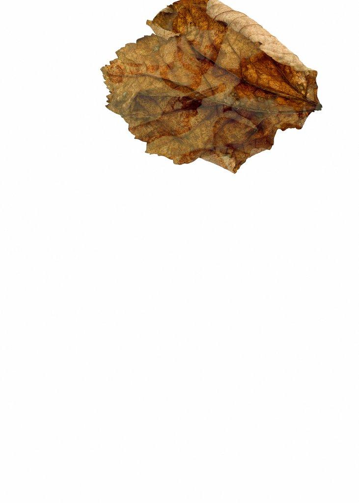 Human Leaves no. 2