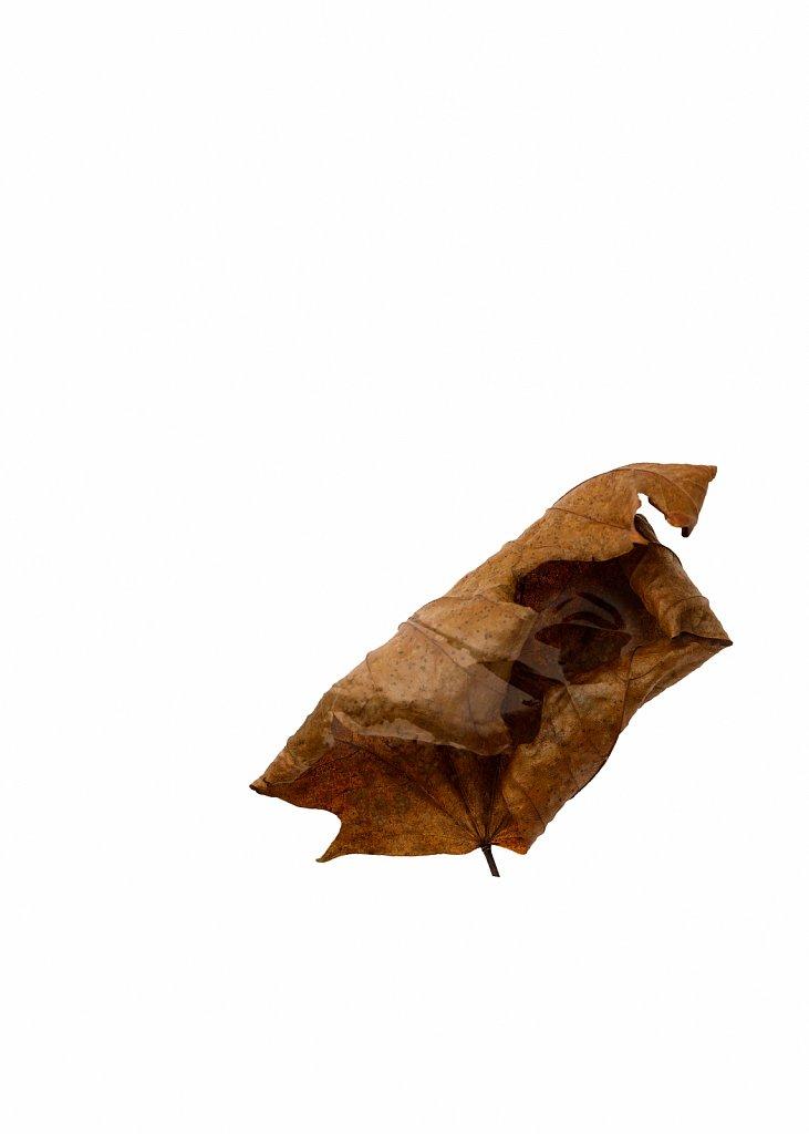 Human Leaves no. 4